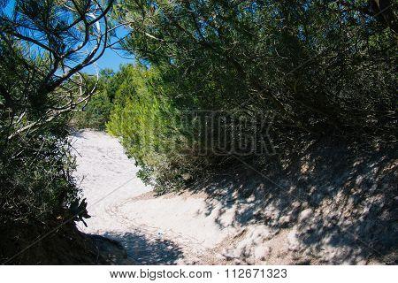 Dunes In Es Trenc, Ses Salines, Mallorca