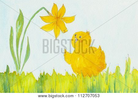 A Cute Little Yellow Chicken And A Daffodil Flower