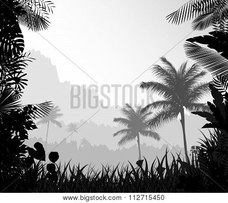 The forest landscape of foggy with palm tree