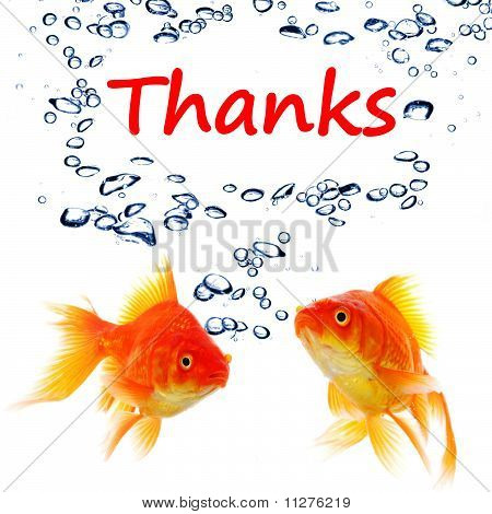 thanks or thank you concept with word and goldfish poster