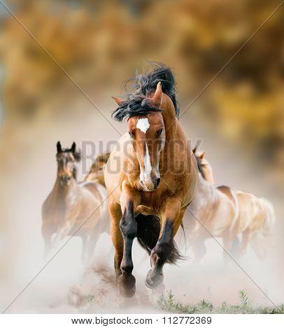 Wild Horses Running In Autumn