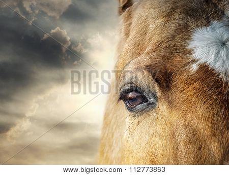 Horse Eye And Skies