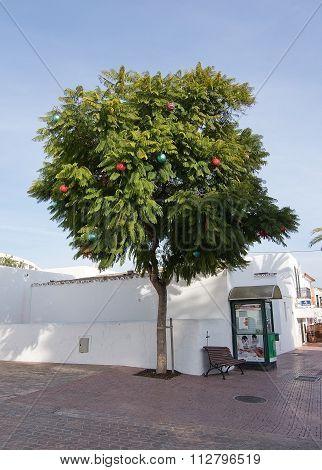 Jacaranda Tree With Christmas Baubles