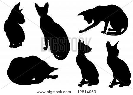 Collage Of Silhouettes Cat