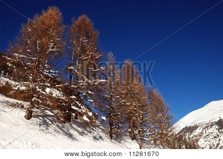 Trees on mountain tops