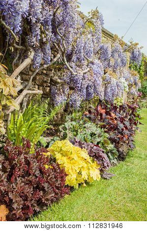 Summer garden colorful flower side boarder and tree
