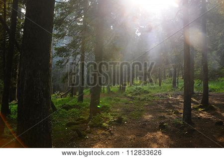The Sun In The Forest