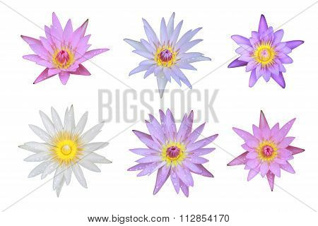 Six Mix Of Pink And White Lotus Flower Top View Has Some Drop Water On The Petal, Isolated On White