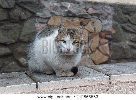 Single Homeless Cat Sitting On The Parapet