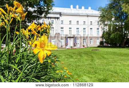 Yellow Lily Flower With Buds Close Up On The Blurred Background In Tsarskoe Selo, Russia