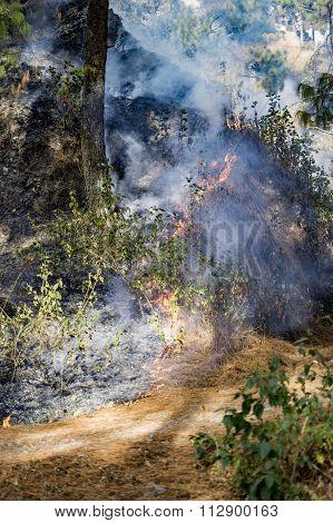 Burnt Trees On Hill