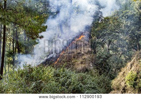 Wildfire Spreading Upward