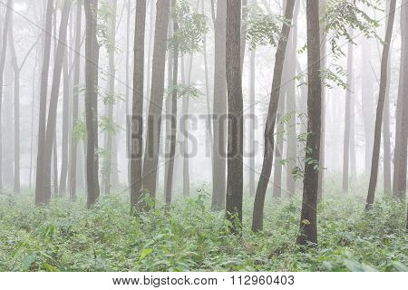 Trunks Of Trees In A Floodplain Forest