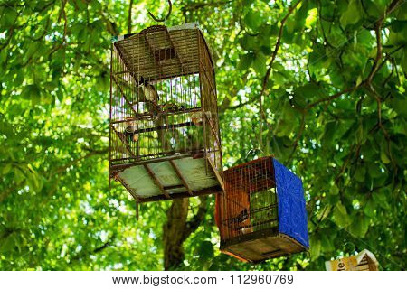 birds trapped in cages hanging in trees