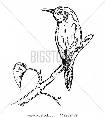 vector - Kingfisher sitting on a branch