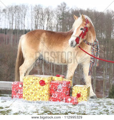Nice Horse With Scarf And Christmas Gifts In Winter