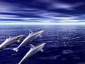 family of dolphins travels on ocean spaces poster