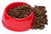 dry pet food in round red bowl poster