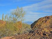 The rugged boulder strewn terrain in Fountain HIlls Desert Botanical Garden is replete with Saguaro and Cholla Cacti Palo Verde trees and many other varieties of plants even in winter. And the trail offers many enchanting scenic views. rough rugged uneven poster