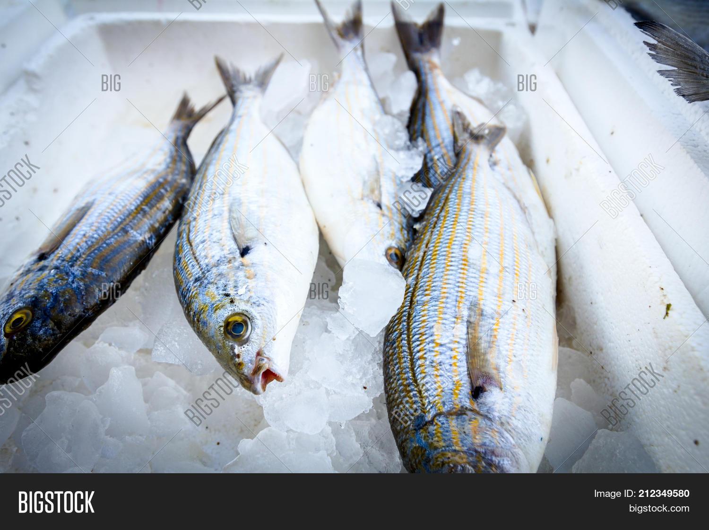 Fresh Fish Sarpa Salpa Image & Photo (Free Trial)   Bigstock