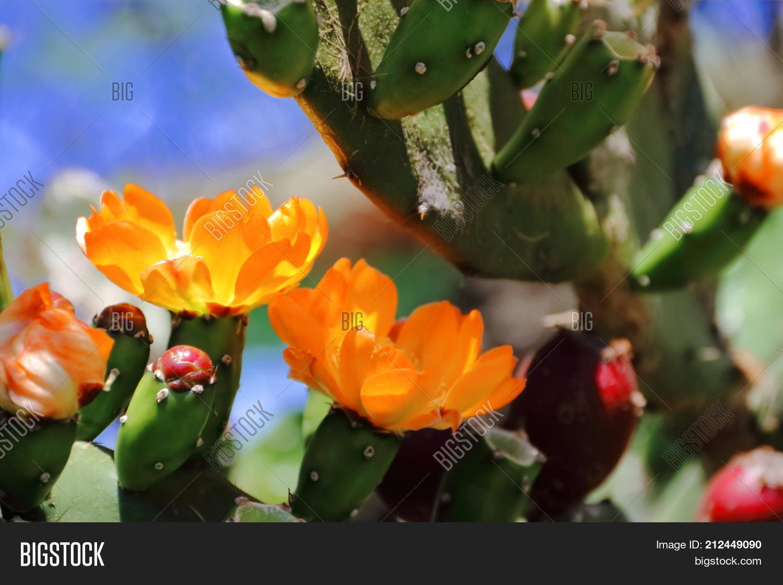 Cactus Succulents Image Photo Free Trial Bigstock