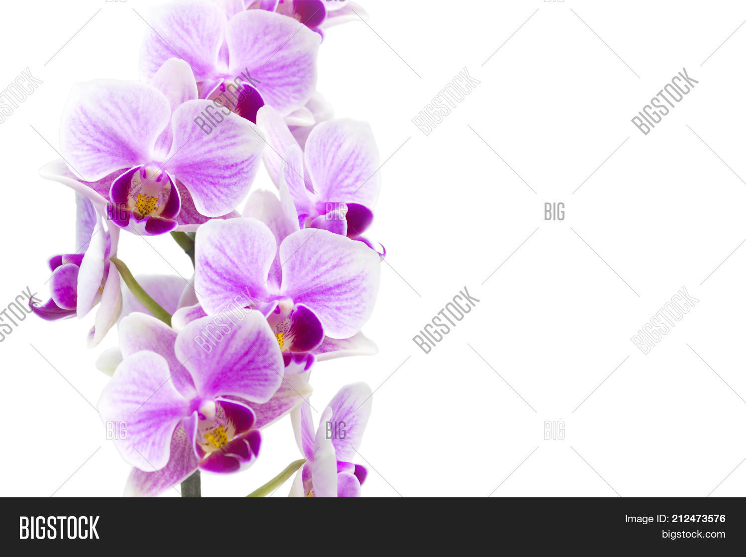 Photo Tender Orchid Image Photo Free Trial Bigstock