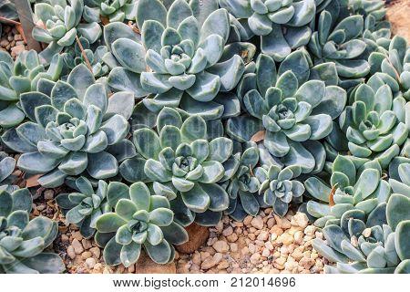 green succulent plants growing on sand in garden