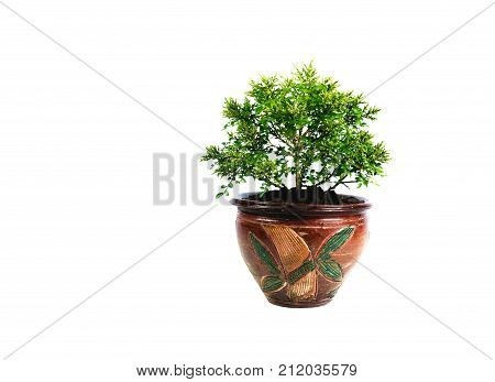Green potted plant trees in the pot isolated on white background.