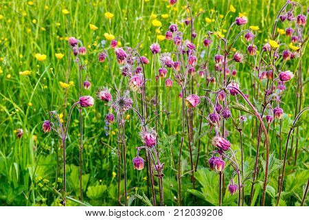Summer wild flowers on a green field in a sweltering summer day