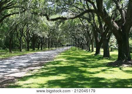 A breathtaking avenue sheltered by live oaks and Spanish moss leads to the tabby ruins of Wormsloe