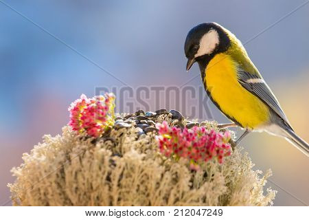 Titmouse is sitting on the bird feeder in the background of colorful blurred background. Beautiful bright picture with a bird. Caring for birds in winter. Studio photography.