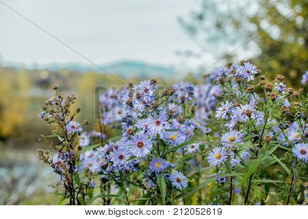 small blue flowers in summer on a background of landscape