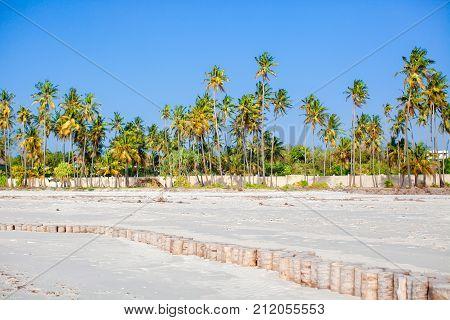 Palm trees on white sand beach. Playa Sirena. Cayo Largo.