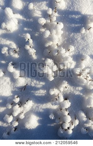 wheat Stubble on the field under the snow, winter conditions of agriculture, close-up, top view