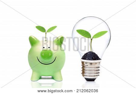 A green piggy bank and a lightbulb with a tree inside - Living Green and Saving Energy