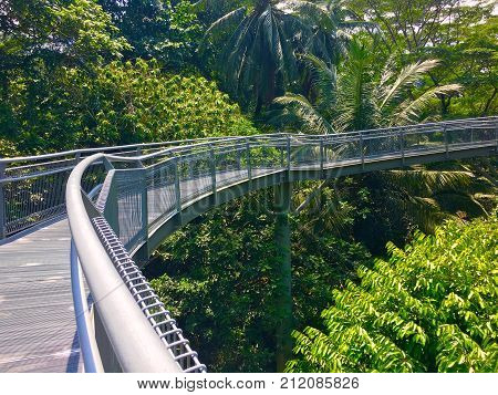 Tree top forest walk over tropical rainforest during Southern Ridges trail in Singapore