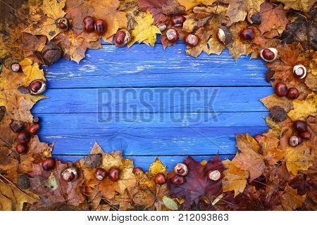 Aged blue wooden boards in a frame of dry brown chestnut leaves and ripe chestnuts or Aesculus hippocastanum fruits.