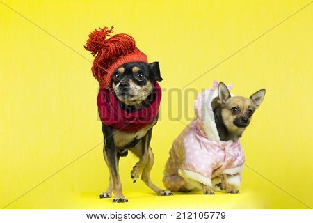 Funny Dogs In Winter Clothes