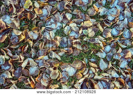 top view for many autumn leaves with hoar in november morning