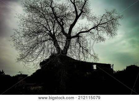 A secular tree in winter immersed in an abandoned place full of ruins and remains of a bombing after the war: black and white shot with very dark sky.