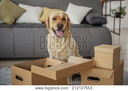 Portrait of cheerful young dog situating near carton boxes in apartment. Moving concept