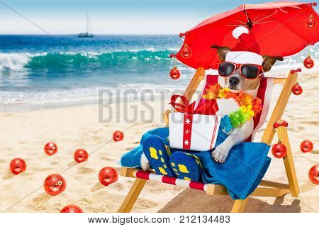 Dog In Hammock  As Santa Claus On Christmas At The Beach