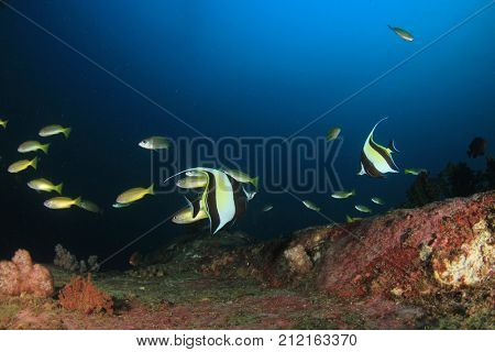 Underwater coral reef and fish