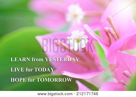 Life quote motivation quote with natural background LEARN FROM YESTERDAY LIVE FOR TODAY HOPE FOR TOMORROW