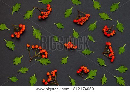 Autumn pattern with leaves and ashberry on black background.