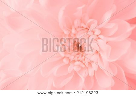 blurry pink flower or pink flower image use for pink flower background