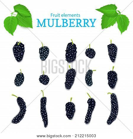 Vector set of a fresh black mulberry. Fresh dark Berries and leaves. Collection of ripe mulberry fruits elements for packaging design of juice, breakfast, jam, ice cream, smoothies, cosmetics