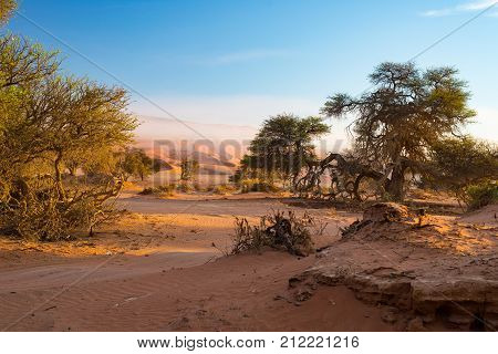 Sossusvlei Namibia, Scenic Clay Salt Flat With Braided Acacia Trees And Majestic Sand Dunes. Namib N