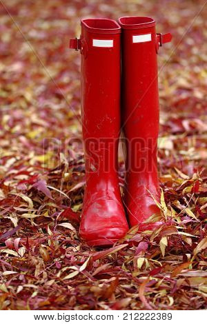 pair of ladies red wellington boots standing up in autumn leaves