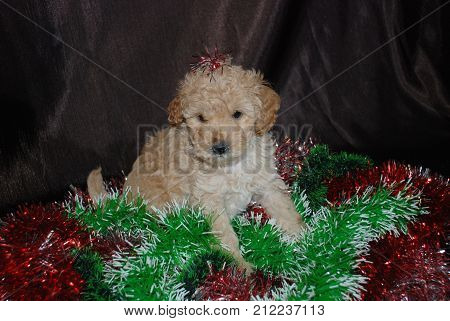 Dogs puppies carouse, new year, symbol of the year, Chinese horoscope.